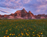Badlands National Park, Prairie coneflowers, bloom, geologic