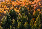 Colorado, aerial, fall, side-lighting