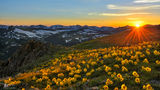 mountain, Rocky Mountain National Park, flowers, sun, sunflower, tundra