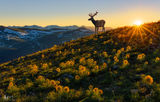 Rocky Mountain National Park, colorado, elk, posing, tundra
