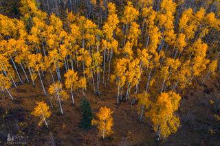 Autumn Radiance print