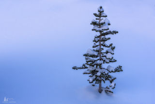 Winter Blue print