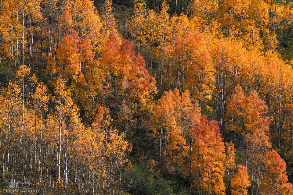 Colorado, fall, Crested Butter, aspen, colorful