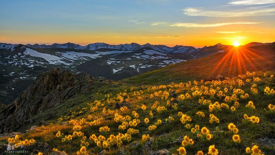 mountain, Rocky Mountain National Park, flowers, sun, sunflower, tundra