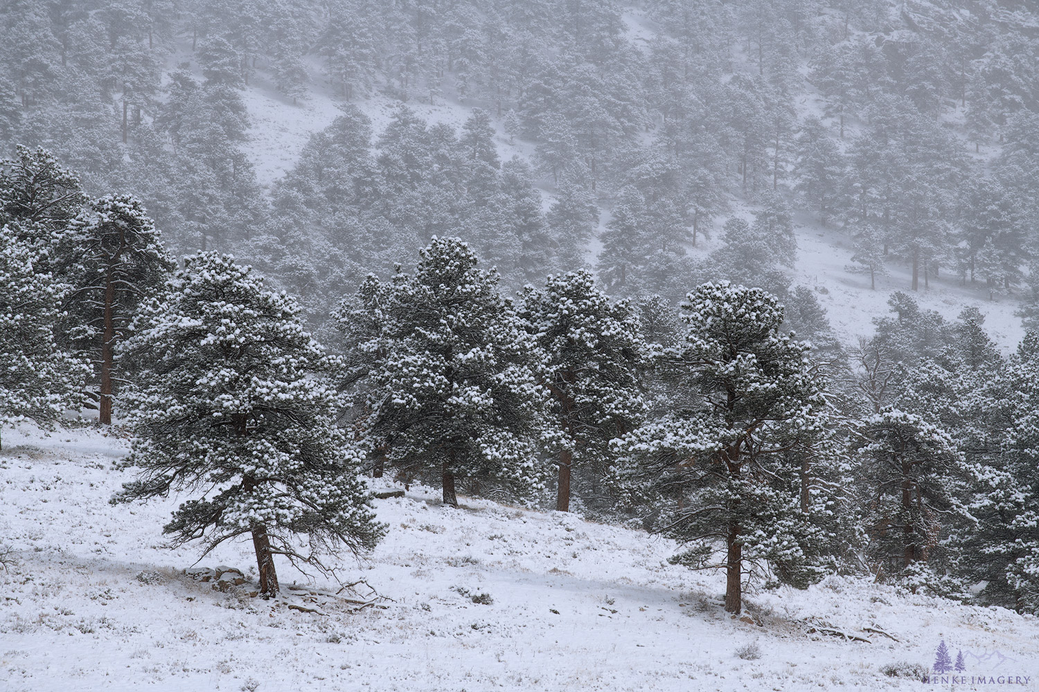 A peaceful snowy day inRocky Mountain National Park.